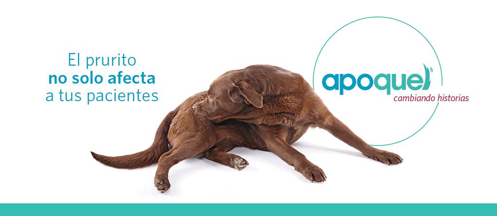 Prurito canino causas y tratamiento pdf