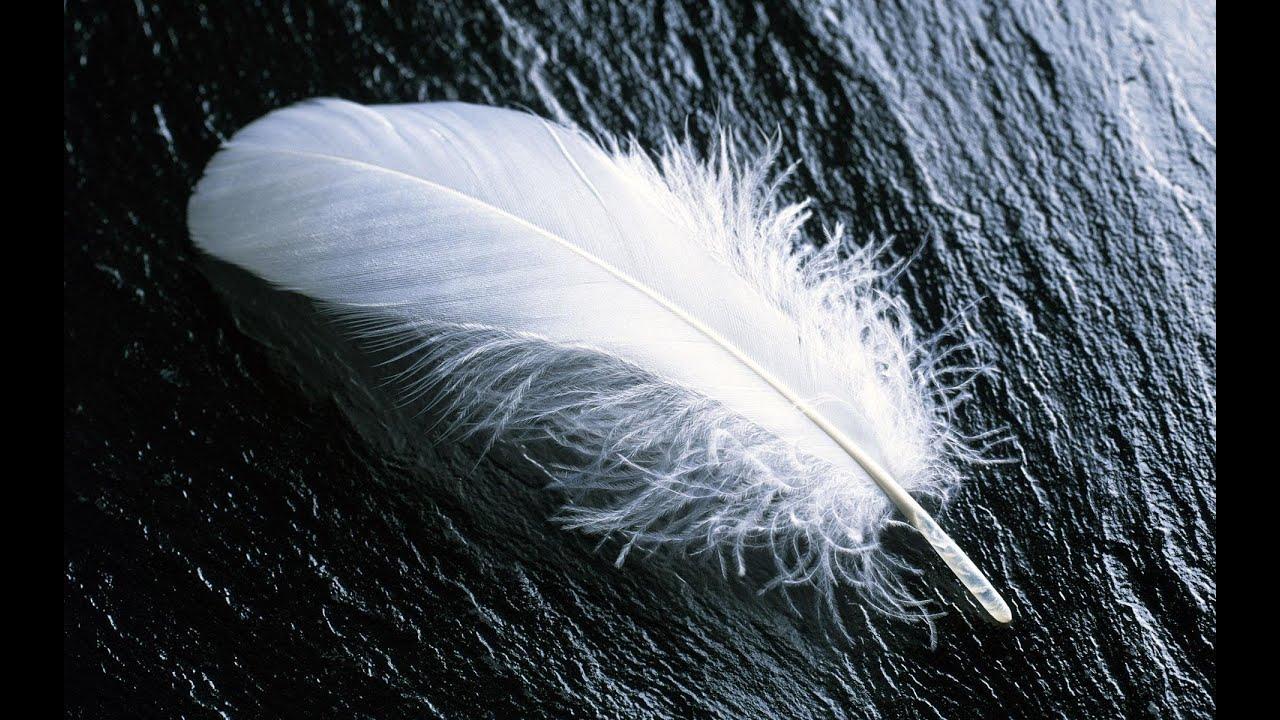 Forrest gump feather theme pdf