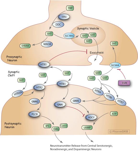 Selective serotonin reuptake inhibitors ssris pdf